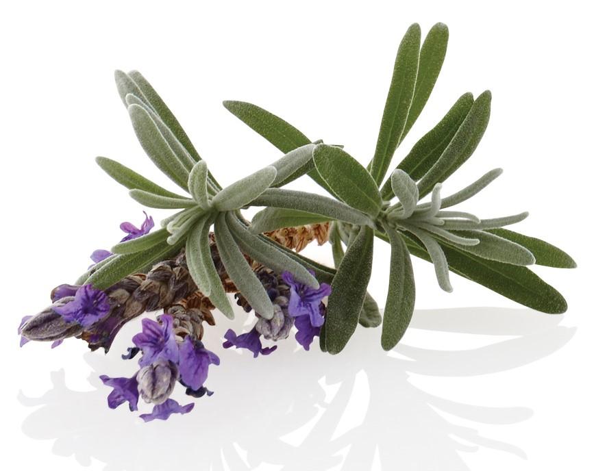 Pure Plant